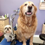 modern_pets_grooming_academy